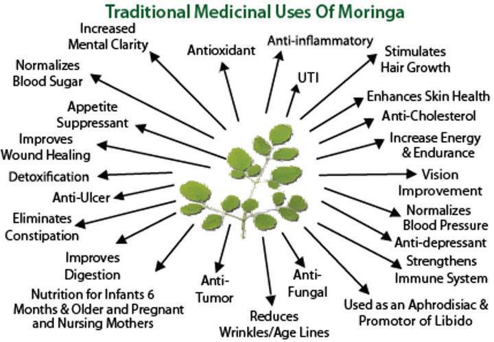 Moringa In Shakeology